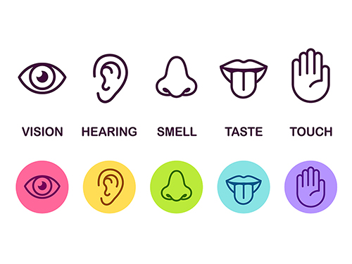 In this post, we will talk about the five senses in Arabic, including some information about the different body organs that our senses use