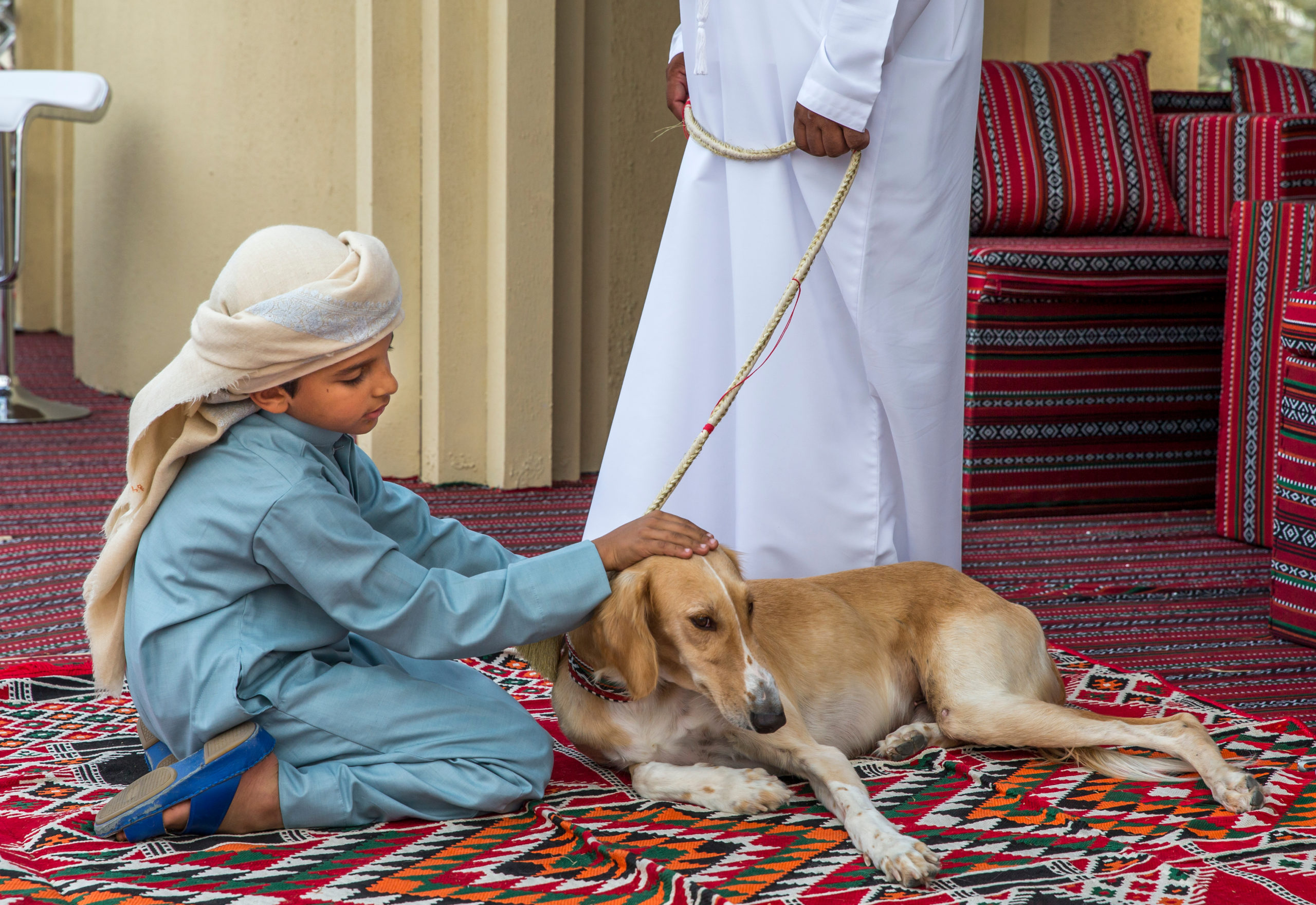 Fast and clever, the Saluki, an Arab dog breed, has been a hunting and guard dog for desert people in the Arabian Peninsula for 5,000 years.